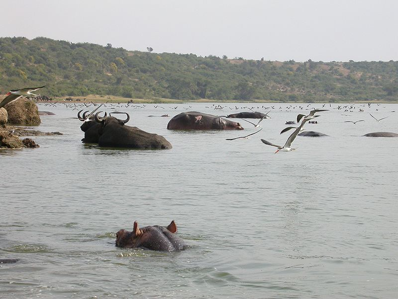 CSH - Kazinga Channel